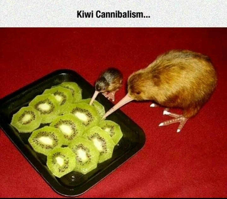 Kiwiside - meme