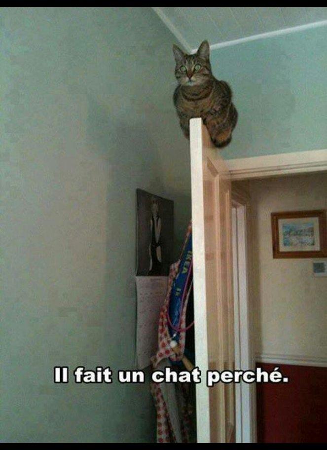 Lol chat perche - meme