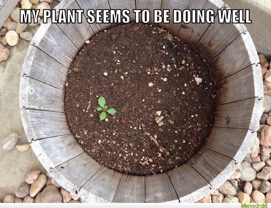 Sad plant - meme