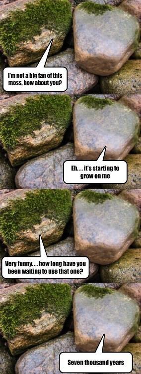 not a big fan of moss...!!! - meme