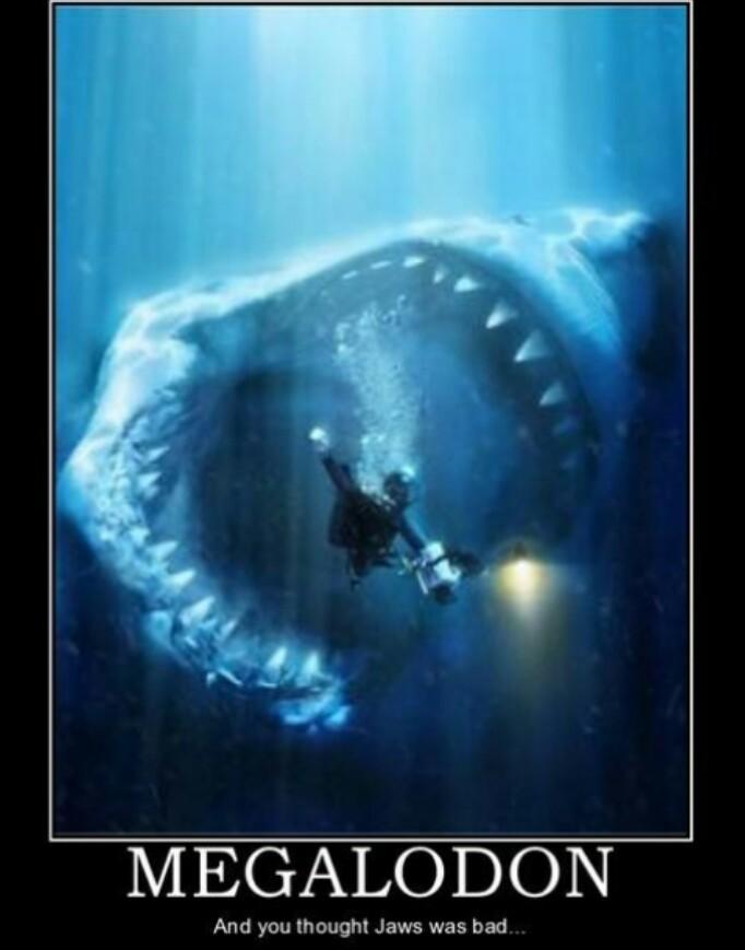boss ass shark - meme