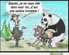 Panda niqueur - meme