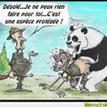 Panda niqueur