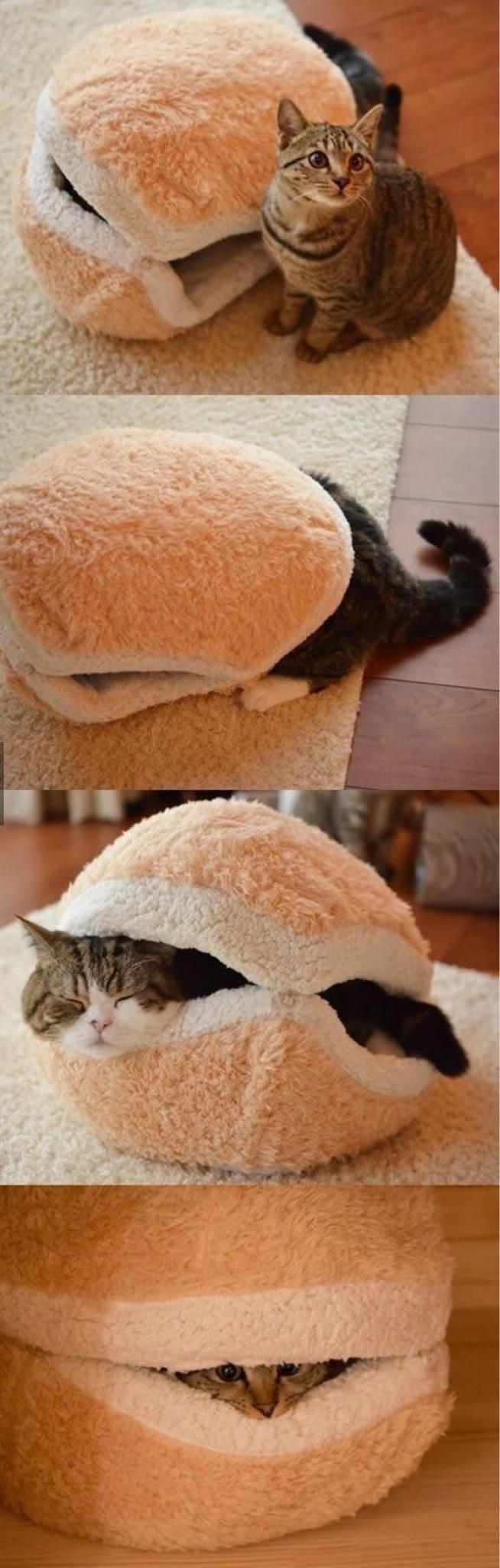cat in a bun - meme