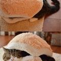 cat in a bun