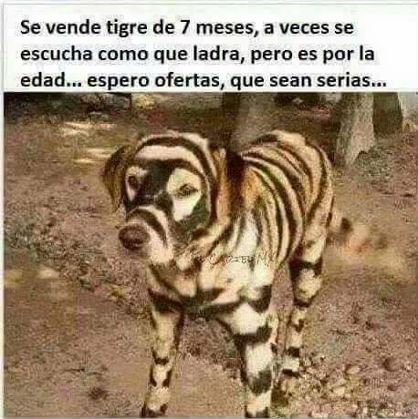 El titulo se fue a comprar un tigre - meme
