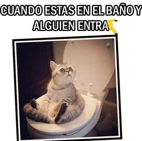 Disculpe señor gato .-. - meme