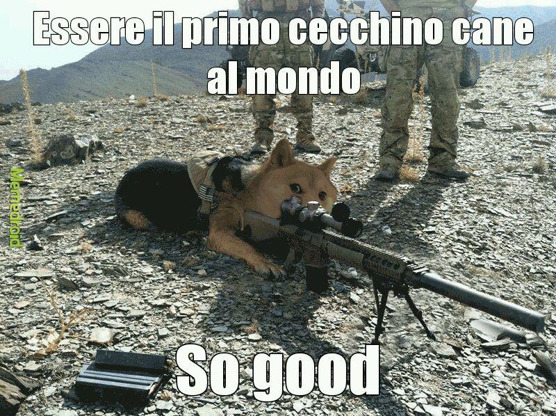 Military dog - meme