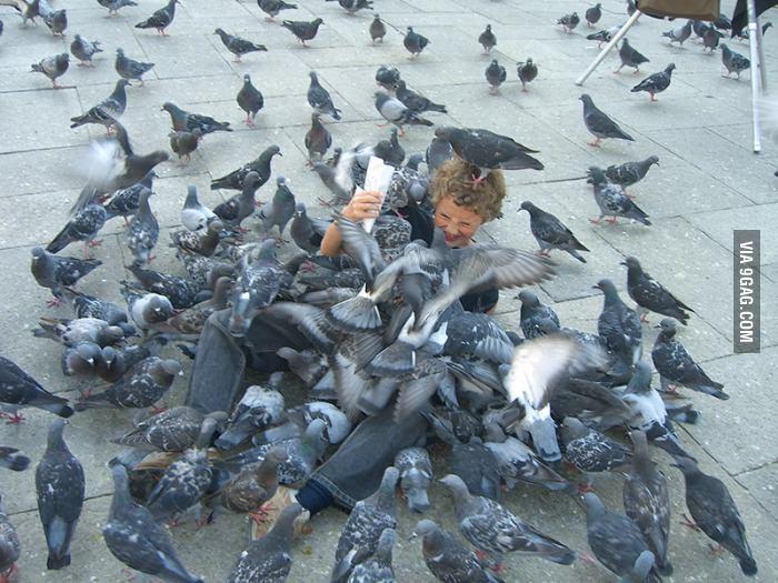 Gentil pigeon... Rat du ciel - meme