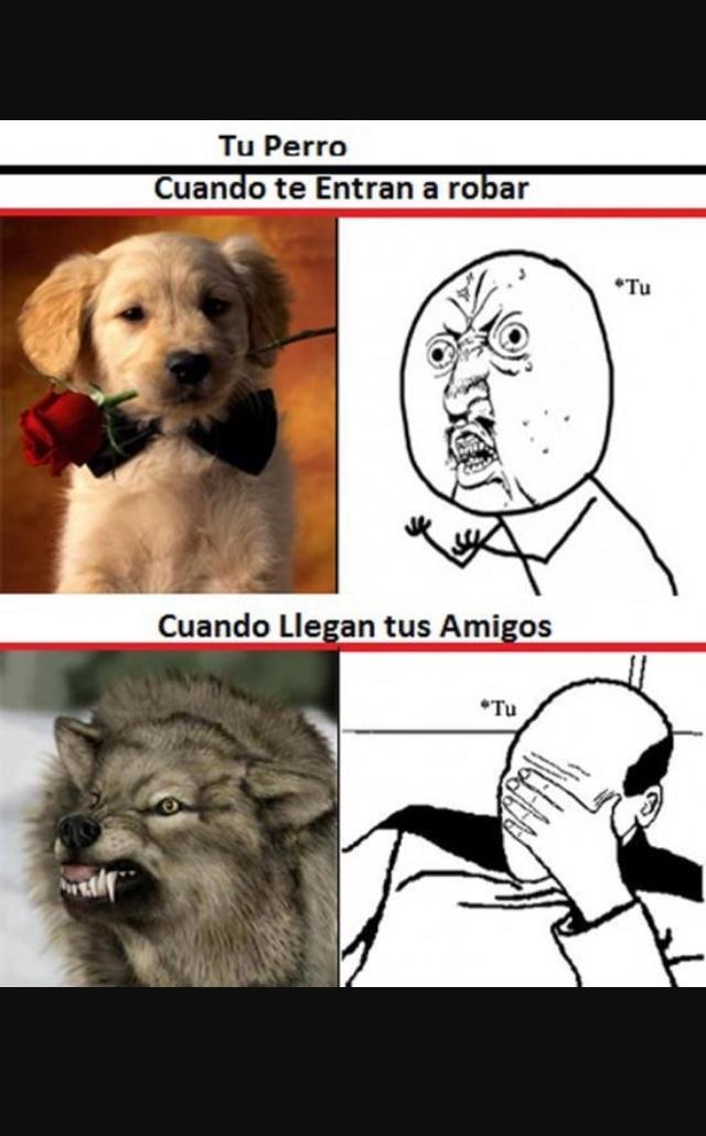 perros - meme