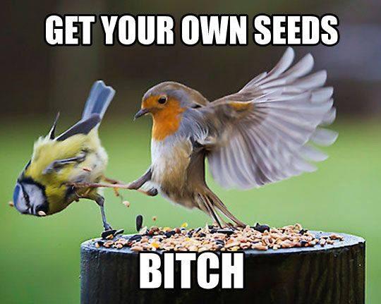 Get your Own Damn Seeds - meme