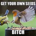 Get your Own Damn Seeds