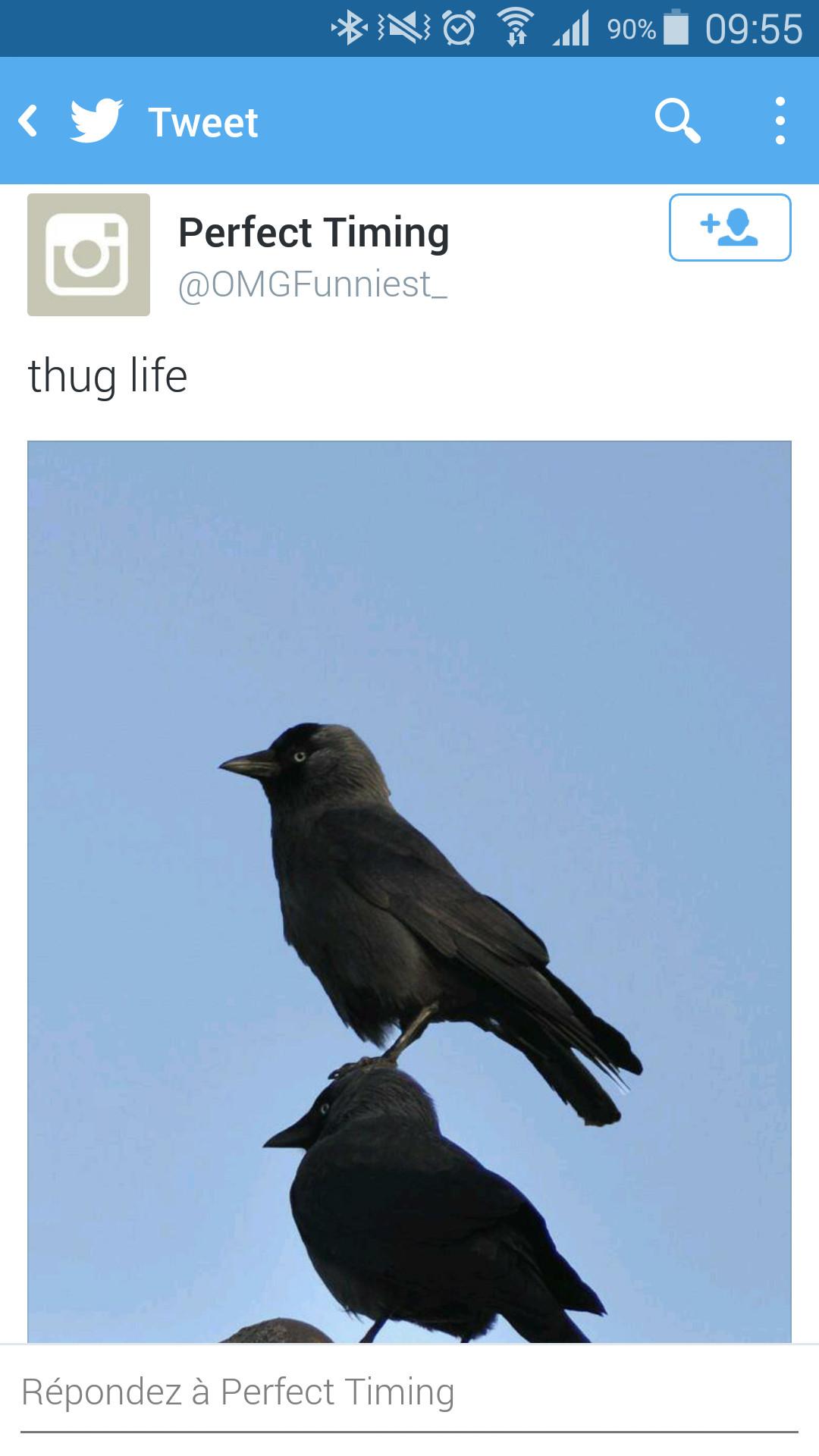 ThugBird - meme