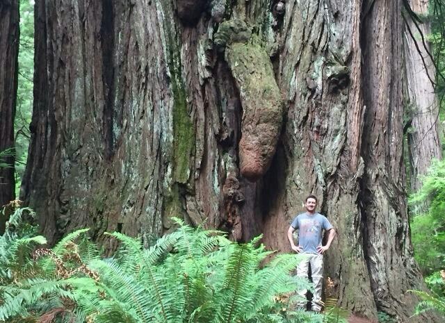 séquoia géant très géant - meme