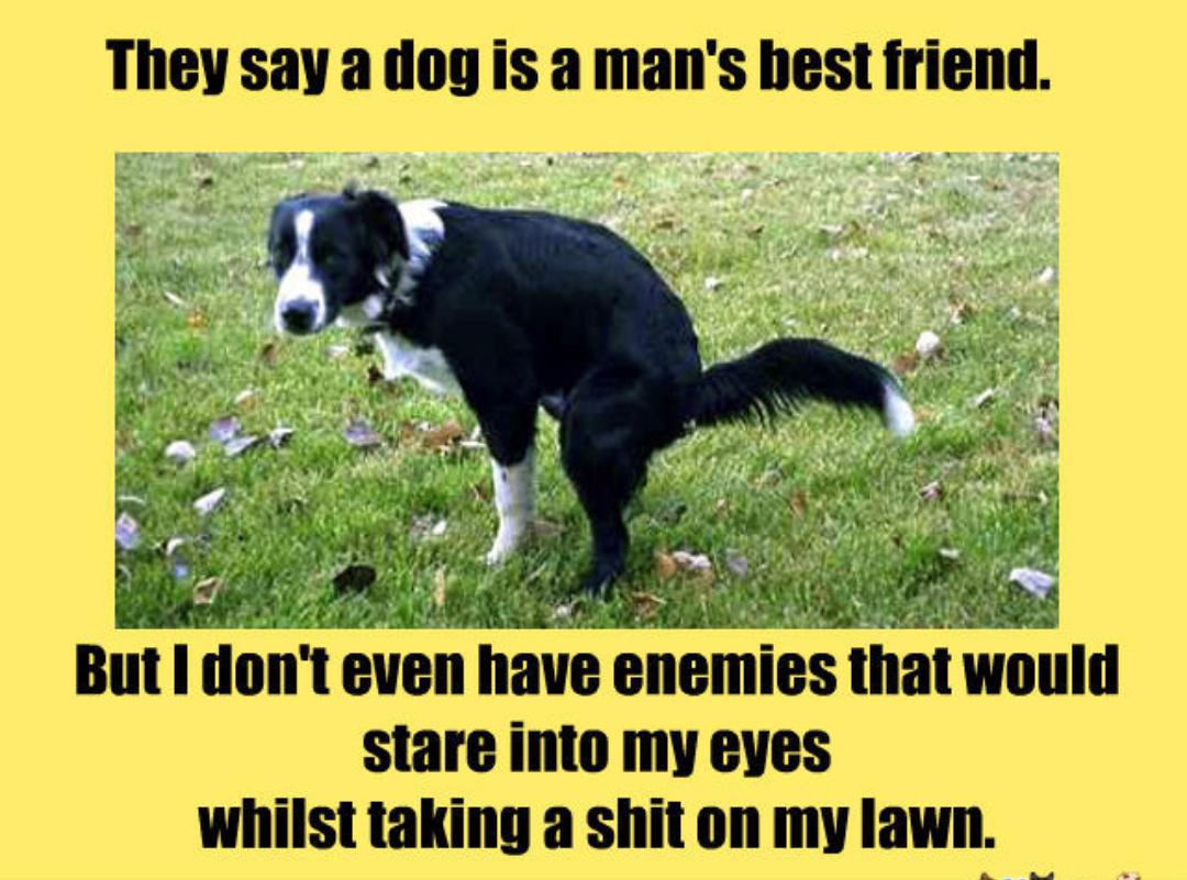 Doge poop - meme