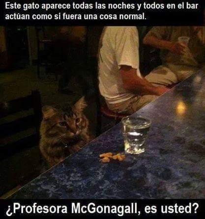 Profesora alcoholica - meme