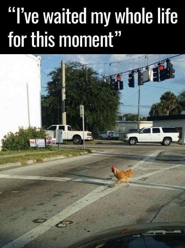 Yes!! Did anyone ask why it was crossing the road??? - meme