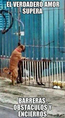 El verdadero amor superando obstaculos  :-) - meme