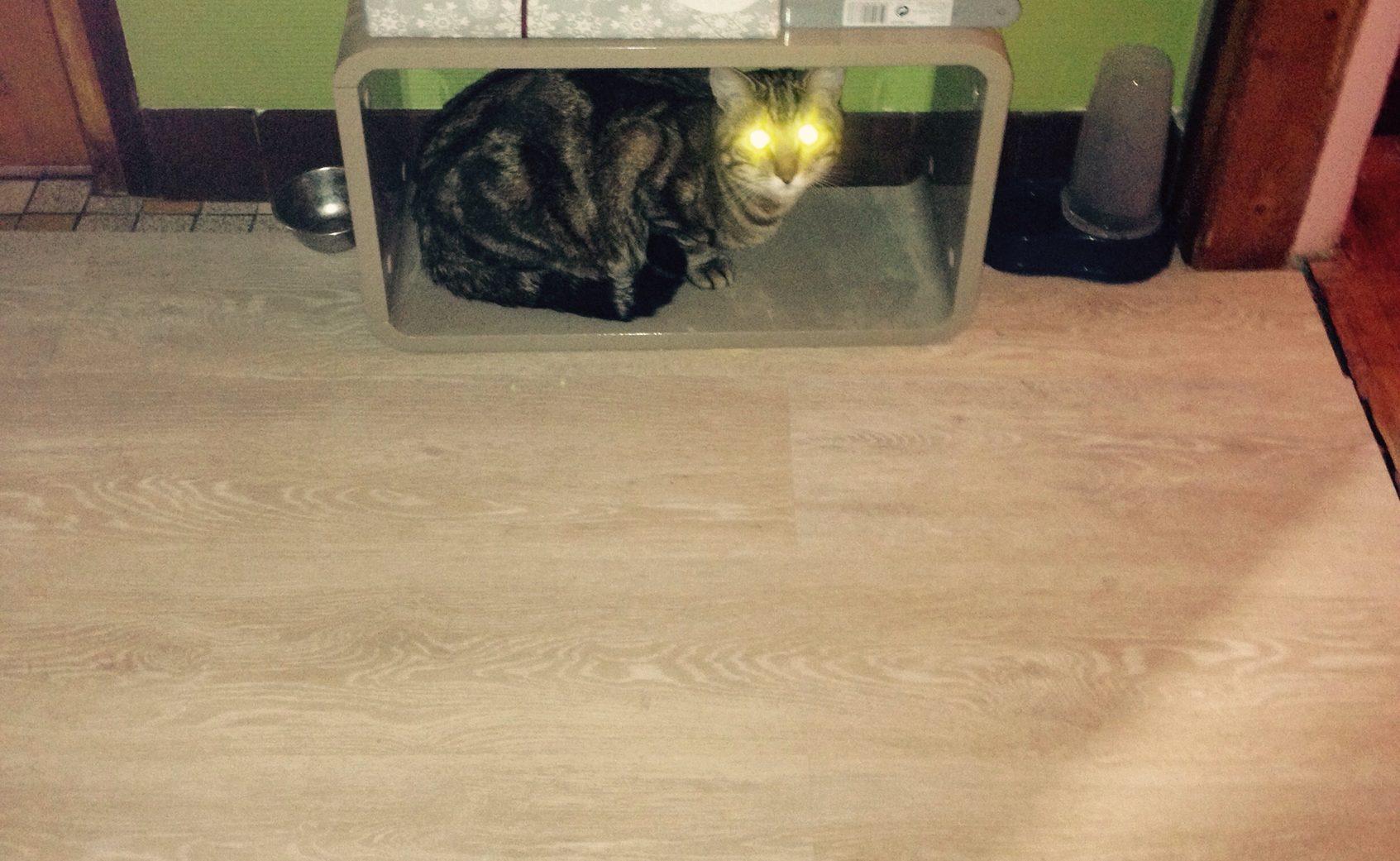 Les chats zombies nous envahissent - meme