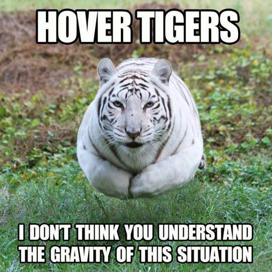 Hover tiger ! - meme