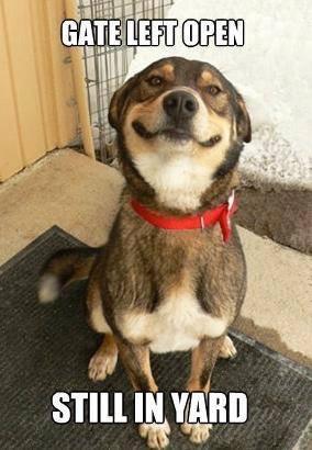 who's a good boy? - meme