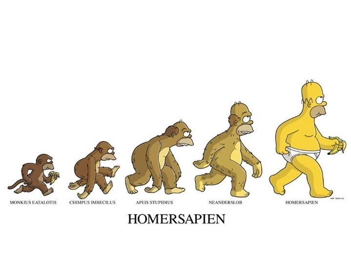 Homer evolution - meme