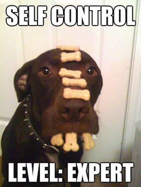 Don't eat the treats yet - meme