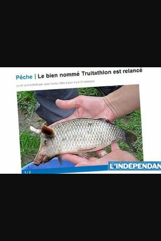 Le truitathlon - meme