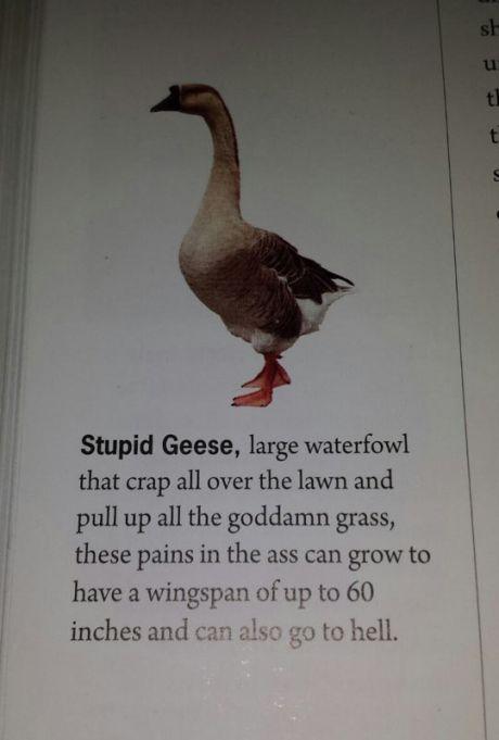 Stupid geese - meme