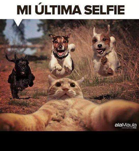 Jajaja pinche gatito - meme