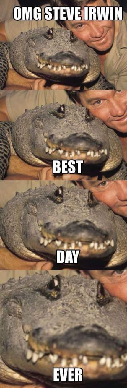see ya later alligator....RIP - meme