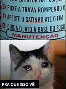 Deixa o gatinho - meme