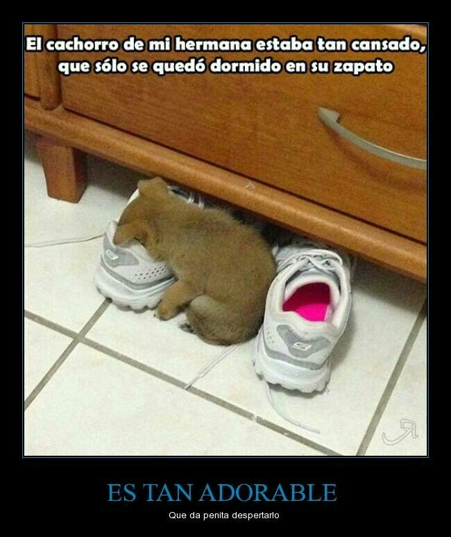 es tan adorable - meme