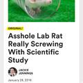 Asshole rat