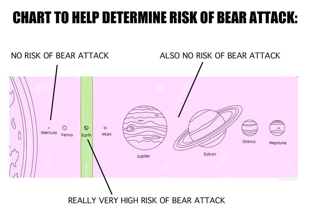 1 in 2 people get attacked by bears every day - meme