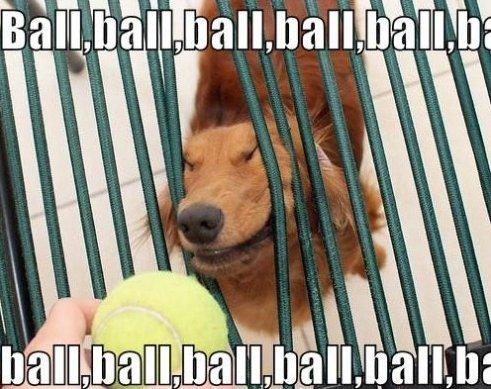 Ball ball ball - meme