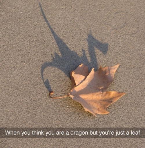 silly leaf - meme