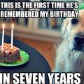 Bad luck dog