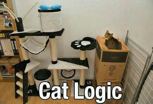 La logique des chats est quelque peu indescriptible et si tu as lu le titre jusqu'au bout, tu as le droit d'écrire pantoufle dans les commentaires - meme