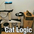 La logique des chats est quelque peu indescriptible et si tu as lu le titre jusqu'au bout, tu as le droit d'écrire pantoufle dans les commentaires