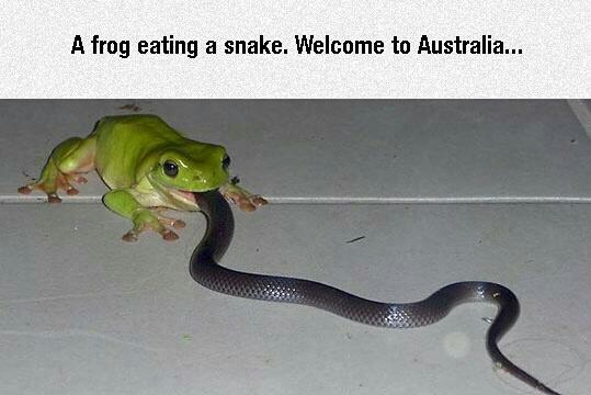 Australia mate - meme