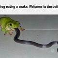 Australia mate