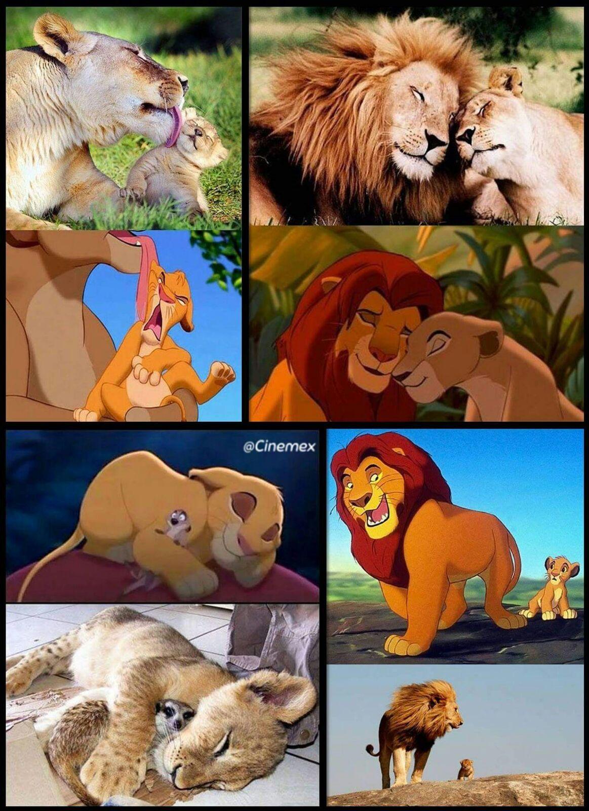 Пиар поздравления, приколы король лев в картинках