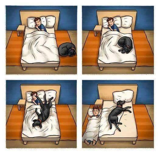 Yo y mi perro :v - meme