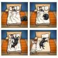 Yo y mi perro :v