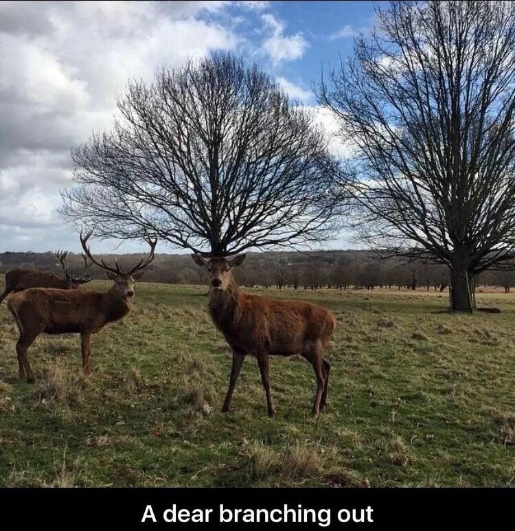 a deer - meme