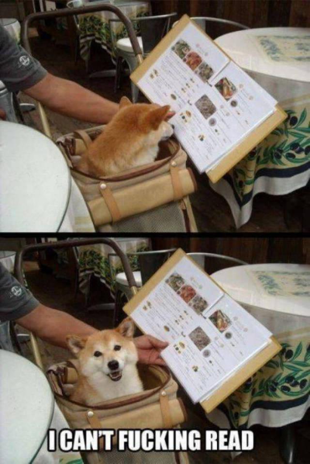 dog's - meme