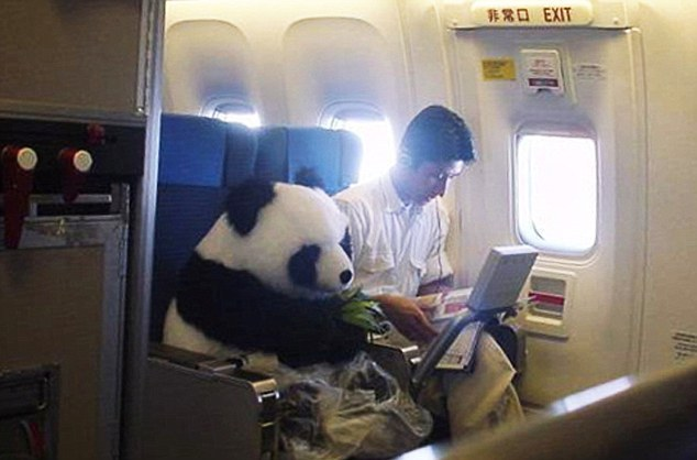 Alors Pandaaa, on prend l'avion maintenant :P ? - meme