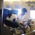 Alors Pandaaa, on prend l'avion maintenant :P ?