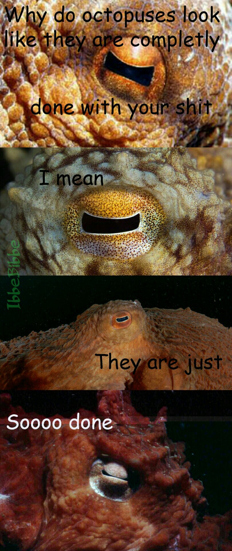 They are silently judging you - meme